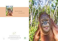 Bornean Orangutan Pongo pygmaeus A5 Greeting Card with Peel and Seal White Envelope