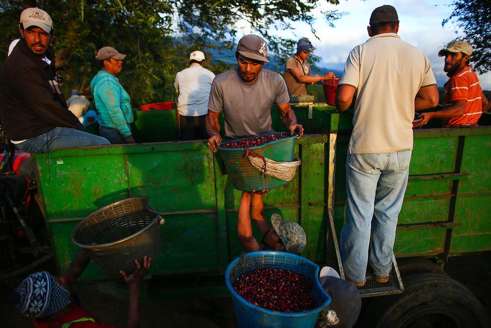 Pickers deliver coffee on Starbucks Hacienda Alsacia coffee farm during the 2016 Starbucks Origin Experience for Partners. Photographed in January 2016. (Joshua Trujillo, Starbucks)