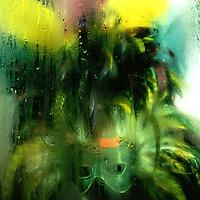 Color Work  - Steven Long