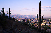 "Downtown Tucson & Saguaro Cactus seen from ""A Mtn"" Tucson Mountain Park, Tucson, Arizona.©1993 Edward McCain. All rights reserved. McCain Photography, McCain Creative.."