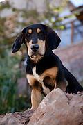 A dog sits on a wall in Cusco Peru