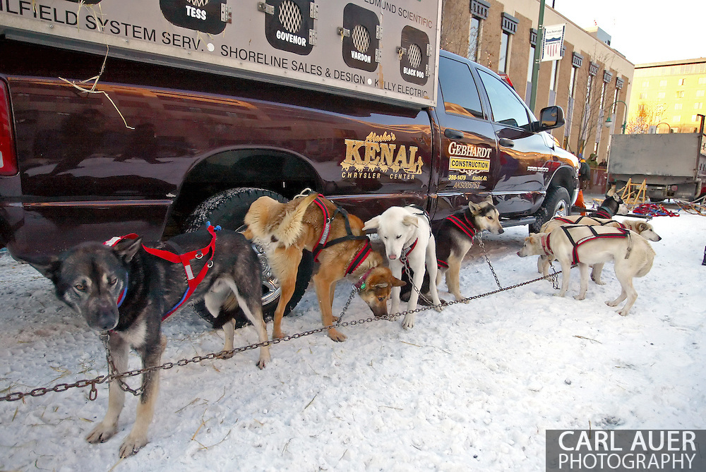 3/3/2007:  Anchorage Alaska -  The team of Veteran Paul Gebhardt of Kasilof, AK prepare for the 35th Iditarod Sled Dog Race