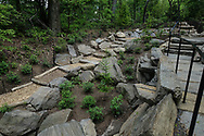Newly planted trees at a restored landscape near the waterfall in the Ramble in central Park