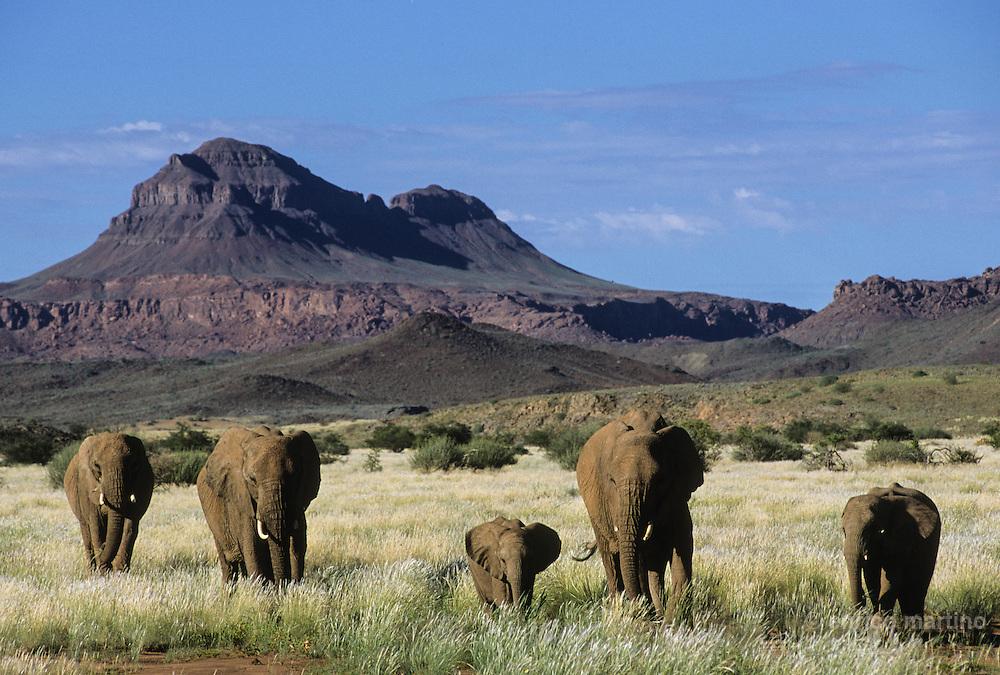Small elephants near Doro Nawas.