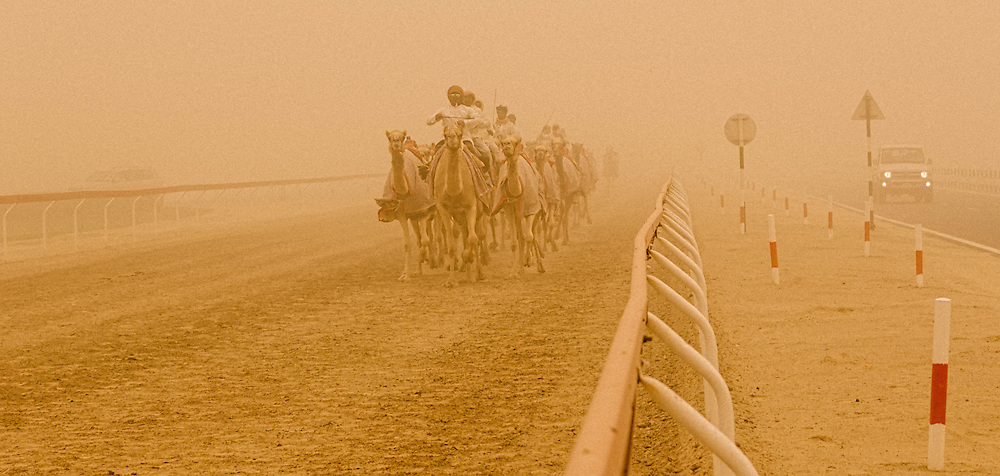 In this image the camel jockeys are taking their camels for a morning run. Alot of camels are ridden by robot jockeys since child jockeys were outlawed in UAE in 2002. If you notice there are two jeeps running alonside them as well, these jeeps are controlling the robot jockeys. Camel racing is a huge spectator sport in the UAE.