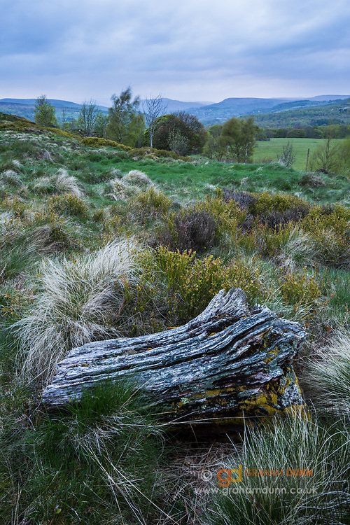 A beautifully decaying log sits amongst the vegetation atop Tumbling Hill in the Peak District. The Derwent Valley, Bamford Edge and Win Hill can been seen in the distance. Landscape Photography in Derbyshire, England, UK. Spring, May 2015.