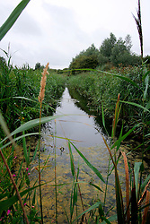 UK ENGLAND CAMBRIDGESHIRE WICKEN 7AUG06 - A small drain in the Wicken Fen National Nature Reserve, managed by the National Trust is one of Britain's oldest nature reserve dating back to the late 1800s...jre/Photo by Jiri Rezac..© Jiri Rezac 2006..Contact: +44 (0) 7050 110 417.Mobile:  +44 (0) 7801 337 683.Office:  +44 (0) 20 8968 9635..Email:   jiri@jirirezac.com.Web:    www.jirirezac.com..© All images Jiri Rezac 2006 - All rights reserved.
