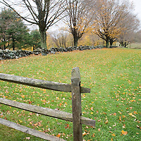Maples and a fence in the fall, Connecticut, USA.