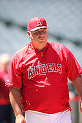 ANAHEIM, CA - JUNE 5:  Mike Scioscia #14 of the Los Angeles Angels of Anaheim looks on during batting practice before the game against the Chicago Cubs on Wednesday, June 5, 2013 at Angel Stadium in Anaheim, California. The Cubs won the game 8-6 in ten innings. (Photo by Paul Spinelli/MLB Photos via Getty Images) *** Local Caption *** Mike Scioscia