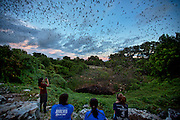 Bracken Cave in San Antonio, Texas.  During the summer months, 20 million Mexican Free-Tailed bats come to Bracken Cave to have their babies.