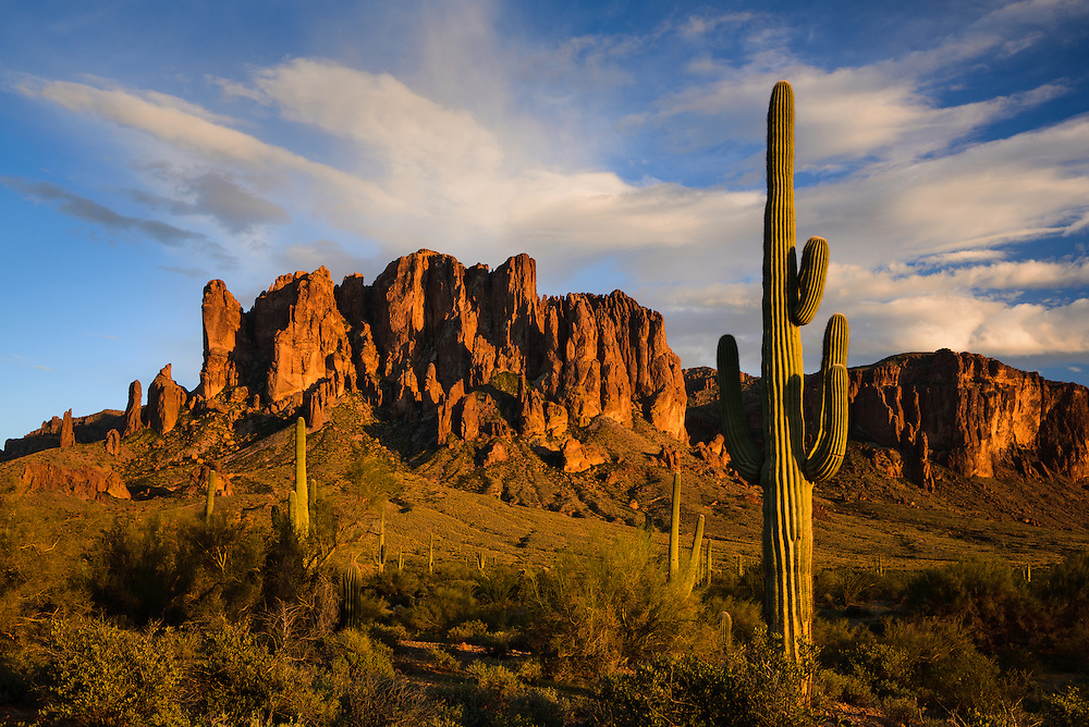 Saguaro cacti and the Superstition Mountains. Lost Dutchman State Park near Phoenix, Arizona.