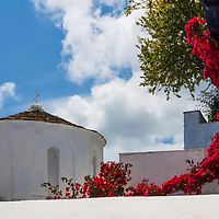 Red flowers bush on the white walls Skopleos island