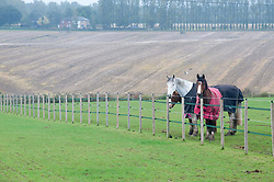 ©Licensed to London News Pictures 15/10/2019<br /> Eynsford,UK. Horses grazing in a field near Eynsford on a grey and wet autumnal morning in Eynsford, Kent. Photo credit: Grant Falvey/LNP