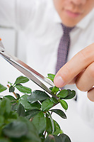 Cropped image of Asian businessman pruning plant