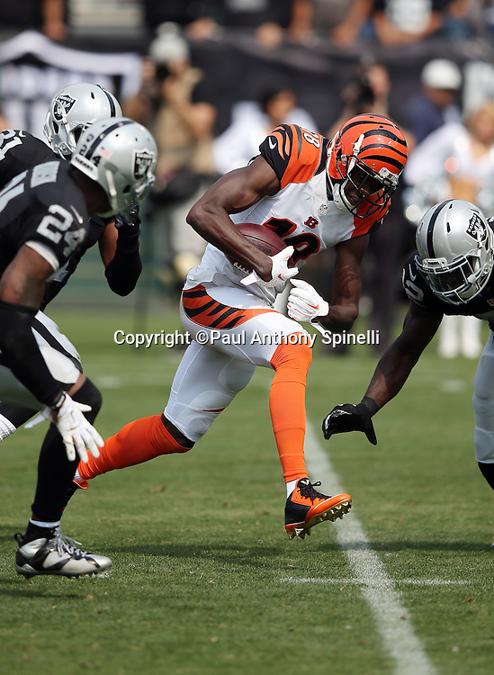 Cincinnati Bengals wide receiver A.J. Green (18) catches a second quarter pass for a gain of 30 yards and a first down at the Oakland Raiders 10 yard line during the 2015 NFL week 1 regular season football game against the Oakland Raiders on Sunday, Sept. 13, 2015 in Oakland, Calif. The Bengals won the game 33-13. (©Paul Anthony Spinelli)
