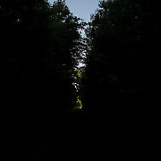 EASTVILLE, VA - JUNE 20: A sliver of light penetrates the trees on a path at on Friday, June 20th, 2014 near Eastville, Va. (Photo by Jay Westcott/For The Washington Post)