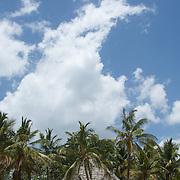 Chapwani-Grave Island, une île déserte devant Stone Town