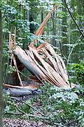 umgeknickter Baum, Wald, Neroberg, Schnee, Wiesbaden, Hessen, Deutschland | broken tree on Neroberg, snow, Wiesbaden, Hesse, Germany