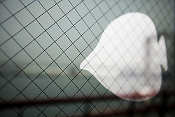 Side View of Flat White Fish behind Metal Mesh