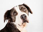 Adoptable Dogs September 2017