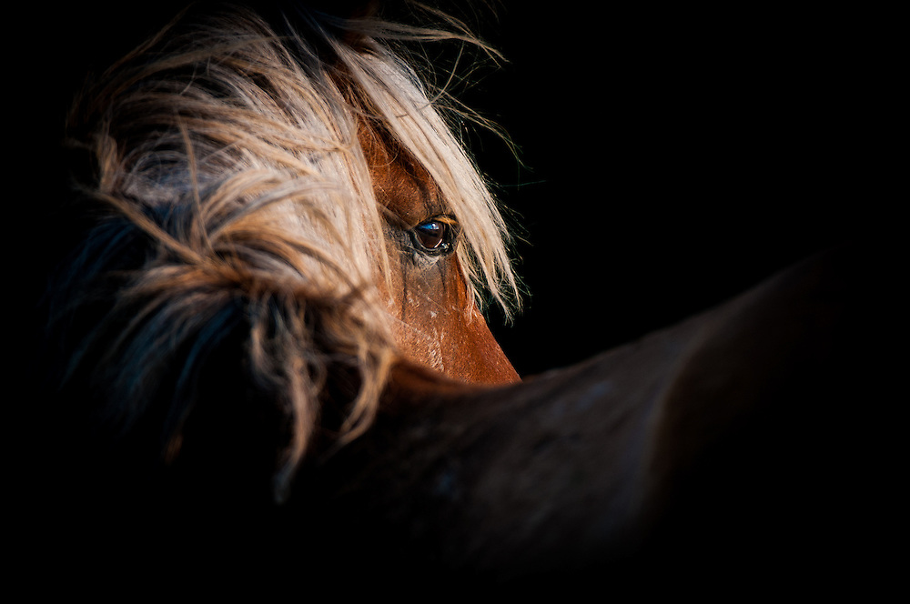 A palmino stallion peers behind him as a solitary shaft of light beams down to illuminate his face and eye in a very moody and artistic pose
