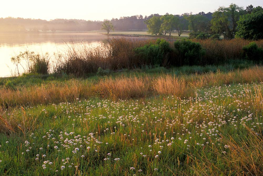 Texas freshwater coastal habitat