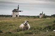 Tacka på Hundlausar mellan Burgsvik och Vamlingbo på Sudret (södra Gotland)