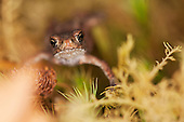 Photographs of Reptiles and Amphibians