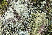 verschiedene Flechten auf Felsen, Sächsische Schweiz, Elbsandsteingebirge, Sachsen, Deutschland | lichens on rock, Saxon Switzerland, Saxony, Germany