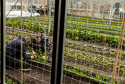 28-03-2018 NED: Kickstart Food van Rabobank, Utrecht<br /> A clever mix of the tastiest seasonal vegetables for the sports public, coming from Dutch local companies. That is the core of the new food program that enables Rabobank and the Nevobo at the Moestuin in Utrecht