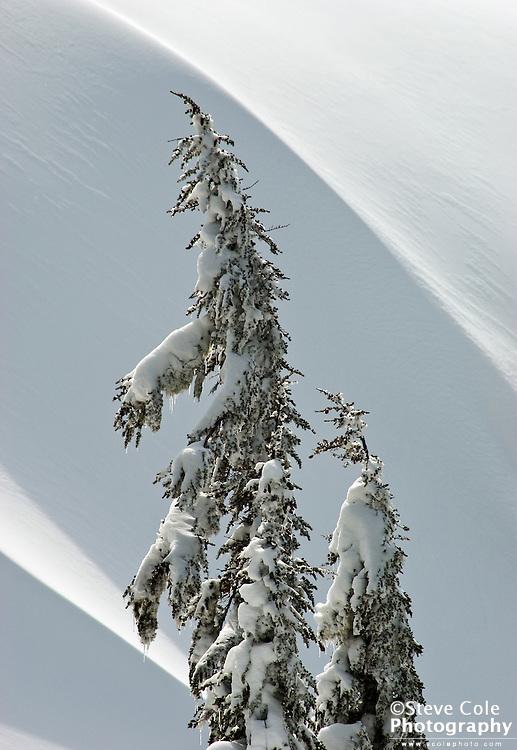 Snow Waves - Mount Baker Ski Area