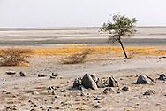 Alberto Carrera, Kubu Island, White Sea of Salt, Lekhubu, Makgadikgadi Pans National Park, Botswana, Africa