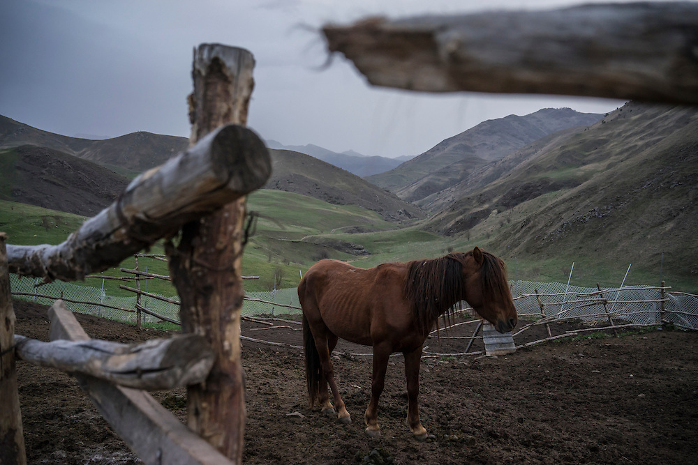 VANK, NAGORNO-KARABAKH - APRIL 22: A Karabakh horse, a breed originally developed in the region which is now faced with extinction, on a farm in the mountains on April 22, 2015 near Vank, Nagorno-Karabakh. Since signing a ceasefire in a war with Azerbaijan in 1994, Nagorno-Karabakh, officially part of Azerbaijan, has functioned as a self-declared independent republic and de facto part of Armenia, with hostilities along the line of contact between Nagorno-Karabakh and Azerbaijan occasionally flaring up and causing casualties. (Photo by Brendan Hoffman/Getty Images) *** Local Caption ***