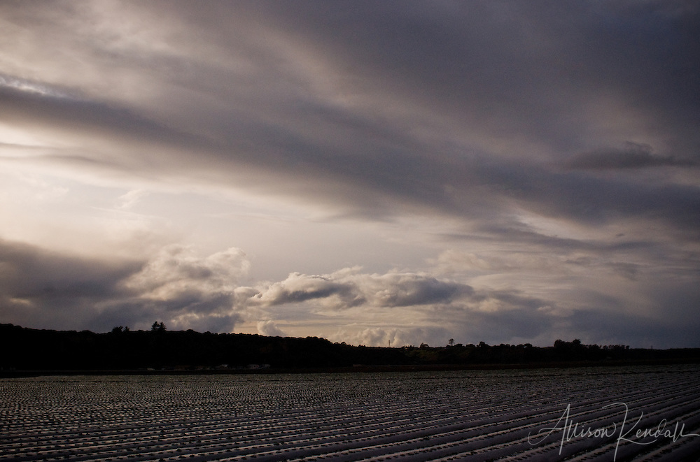 Winter clouds sweep across the rows of crops in Salinas Valley fine art photography, art photography, fine art, prints, photo print, fine art prints, photography art prints,