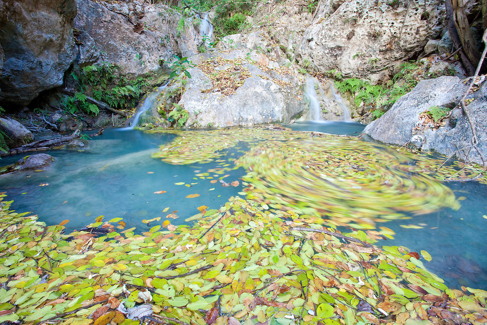 Leaves swirl in the currents of a pool near a spring providing a rare source of fresh water in Ile de La Gonave, Haiti