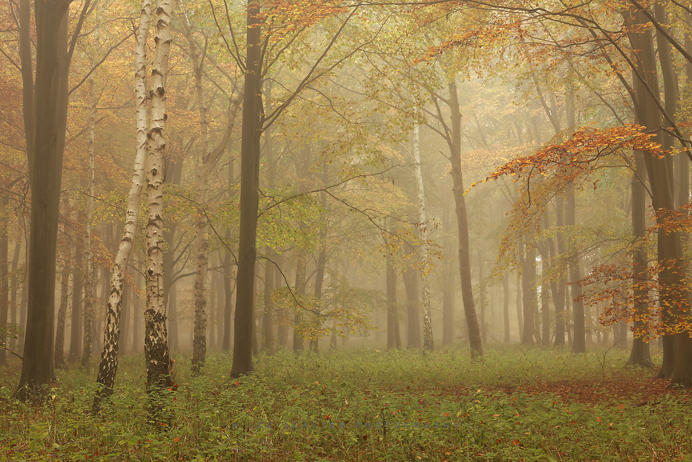 I know there are a lot of misty woodland images around this week, but we dont get the opportunity around here too often, and I bloody love them so hard luck!
