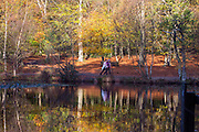 © Licensed to London News Pictures. 27/10/2014. Burnham, UK. Woman walk past autumn colours reflecting in a pond. People walk through the autumnal trees in the mooring sunshine at Burnham Beeches an area of 220 hectares of ancient woodland in Burnham, Buckinghamshire. Today 27th October 2014. Photo credit : Stephen Simpson/LNP