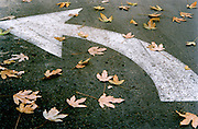 Leaf covered street marking to turn Left