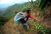 A man carries a full bag of coca leaves to a coca lab in a remote area of the southern Colombian state of Nariño, on Monday, June 25, 2007. Although government efforts to eradicate coca have reached many parts of Colombia, still the coca business thrives. (Photo/Scott Dalton)