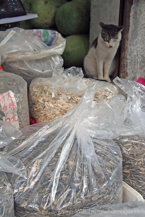 Asia, China, Chongqing. Local cat keeps watch for rats in street market in Chongqing.