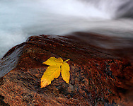 An intimate autumn scene in the Western Alps, a yellow birch leaf lies on a rock beside a small creek. Taken at the end of October in Valle Gesso, one of the many alpine valleys of the Alpi Marittime Natural Park in Piedmont, italy.