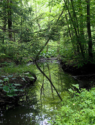 A tranquil forest scene greets visitors to the Muddy Creek Holly Trail at the Sugar Creek Division of teh Erie National Wildlife Refuge.