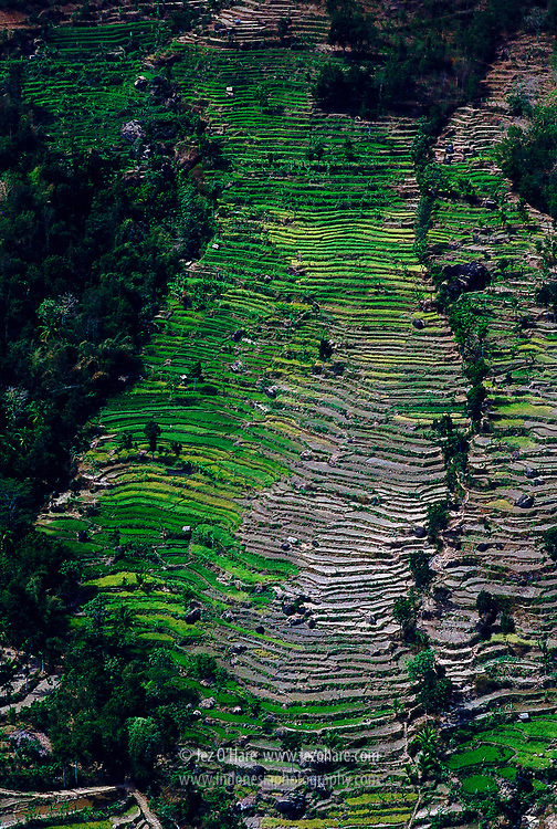 Rice Terraces between Parangtritis & Yogyakarta, Java, Indonesia.