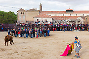 Local people challenging bull with red cape during traditional festival at Madrigal de los Altas Torres in province of Avila, Spain