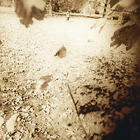 Fall scene with woman crossing field