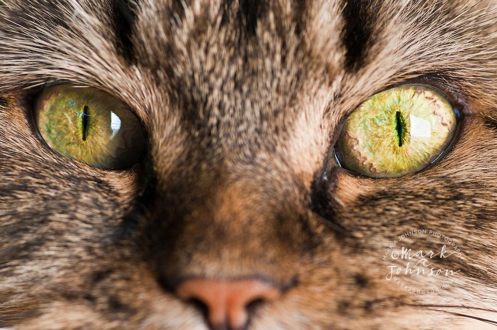 Closeup of cat's eyes