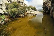 This pond is the habitat for the Majorcan midwife toad (Alytes muletensis) Torrent de s'Esmorcador, Majorca, Spain.  The Majorcan midwife toad (Alytes muletensis) is endemic to the rocky sandstone terrain of the Serra de Tramuntana in the northwest of Majorca. Not before dusk the scientists will return to the road and their car, carrying the tadpoles captured in the wild to be treated in the laboratory. | In dem Tal Torrent de s' Esmorcador hoch oben in der Berglandschaft Mallorcas finden sich kleine Felstümpel - das Laichhabitat der Mallorca-Geburtshelferkröte (Alytes muletensis). Die Kaulquappen werden eingefangen und in das Marineland Aquarium in Las Palmas gebracht. Dort werden sie einer fünftägigen Behandlung gegen die weltweit auftretende Pilzerkrankung unterzogen, bevor sie per Hubschrauber wieder in ihr Gewässer entlassen werden.