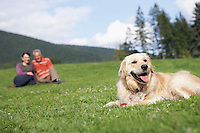 golden retriever reclining in meadow man and woman in background