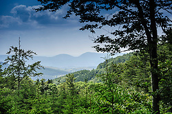 High in the Vosges Mountains near Natzwiller, Alsace, France at an altitude of 1000 metres<br /> <br /> (c) Andrew Wilson | Edinburgh Elite media