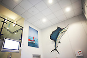 The foyer of New England Seafoods, importers of fish products from the Maldives to the UK and featuring a wall-mounted model sailfish.